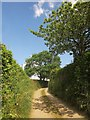 SX2962 : Lane near Bodway by Derek Harper