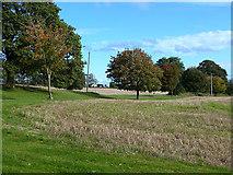 T1687 : Parkland at Garrymore Lower by Oliver Dixon