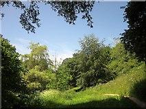 SX8963 : Path along Cockington valley by Derek Harper