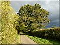 TF0622 : Quercus robur  by Bob Harvey