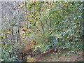 NT5041 : Gullet Wood by M J Richardson