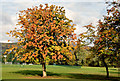 J3171 : Autumn chestnut tree, Musgrave Park, Belfast (October 2014) by Albert Bridge