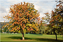 J3171 : Autumn chestnut tree, Musgrave Park, Belfast (October 2014) by Albert Bridge