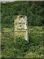 TM2995 : Milestone off the B1332 Norwich Road by Adrian Cable