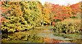 J4774 : Autumn trees, Kiltonga, Newtownards  (October 2014) by Albert Bridge