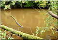 J3370 : The muddy Lagan, Belvoir, Belfast (October 2014) by Albert Bridge