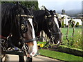 SK2670 : Horses at Chatsworth House by Debbie J