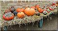 TQ3498 : Pumpkins in the Conservatory, Myddelton House Garden, Enfield by Christine Matthews