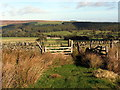 NY9649 : Gate on boundary of Buckshott Fell by Andrew Curtis