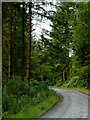 SN7564 : Forestry road south-east of Strata Florida, Ceredigion by Roger  Kidd