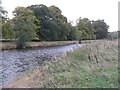 NT2838 : The River Tweed at Kailzie Park by M J Richardson