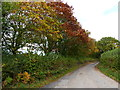 SO4409 : Autumn colours on the road north of Coed-y-fedw by Ruth Sharville