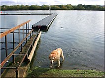 TQ2187 : Reservoir Dog by Des Blenkinsopp