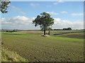 TA0120 : Winter Wheat near Barton Hill Farm by David Wright