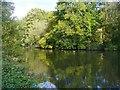 SU9084 : Cliveden - Slow Grove by Colin Smith