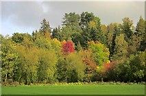 SK1648 : Hinchley Wood by Derek Harper