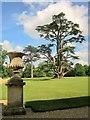 SU1030 : Cedar, Wilton Park by Derek Harper