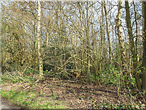 SP0874 : Scrub woodland by Barkers Lane between Inkford and Tanner's Green by Robin Stott