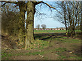 SP0874 : Footpath to Wythall at a meeting of field boundaries by Robin Stott