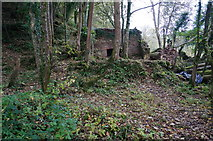 SX8158 : Old ruined building by jeff collins