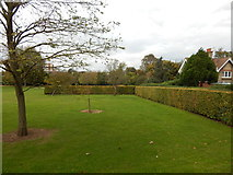TM1543 : Hedges at Gippeswyk Park by Hamish Griffin