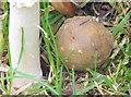 J3269 : Fungus, Clement Wilson Park, Belfast (October 2014) by Albert Bridge