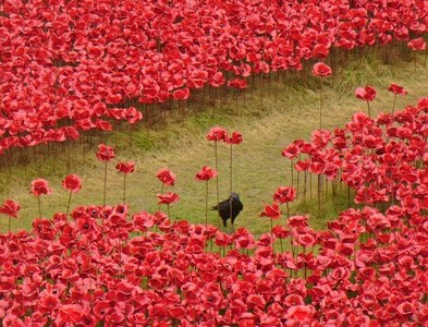 TQ3380 : Sea of Red, River of Green by Colin Smith