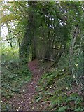 SS6808 : Footpath through Great Wood by David Smith