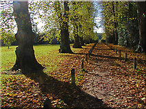 TQ1352 : Polesden Lacey grounds by Alan Hunt