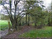 SS7208 : A hedgebank near Lapford Cross by David Smith
