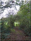 SS7208 : Footpath from Lapford Cross to Nymet Rowland by David Smith