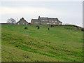 NZ1752 : East Kyo Stud Farm by Oliver Dixon