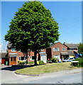 SO7408 : Dominant tree in Frampton on Severn by Jaggery