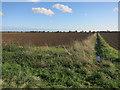TL3964 : Farmland off Wilson's Road by Hugh Venables