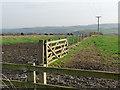 NZ1955 : Field boundary, Tanfield Grange Farm by Oliver Dixon