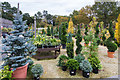 SP1833 : The garden centre at Batsford Arboretum by David P Howard
