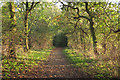 TQ5682 : Tree lined path to Running Water Brook, Belhus Woods Country Park by Roger Jones