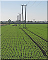 TL4468 : Poles, wires and winter wheat by John Sutton