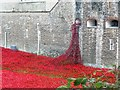 TQ3380 : Poppies Cascading from a window in the Tower of London by Bill Henderson