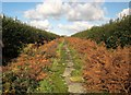 SX3767 : Former road, Viverdon Down by Derek Harper