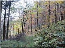 NT4227 : Path, Bowhill by Richard Webb