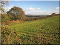 SX3969 : Field above Mill Leat valley by Derek Harper
