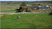 SK1874 : Pony in field near Wardlow by Peter Barr