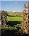 SX3769 : Field near Dupath by Derek Harper
