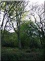 SW7637 : Woodland, Bracken by JThomas