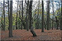 SD9008 : Tandle Hill Country Park by michael ely