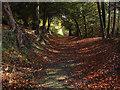 TQ0748 : Pilgrims Way, Netley Park by Alan Hunt