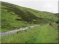 NT9625 : Path by Carey Burn by Hugh Venables