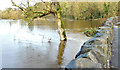 J3067 : The River Lagan in flood, Drumbeg, Dunmurry - November 2014(2) by Albert Bridge