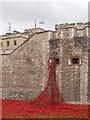 TQ3380 : Poppies at the Tower of London by Paul Bryan